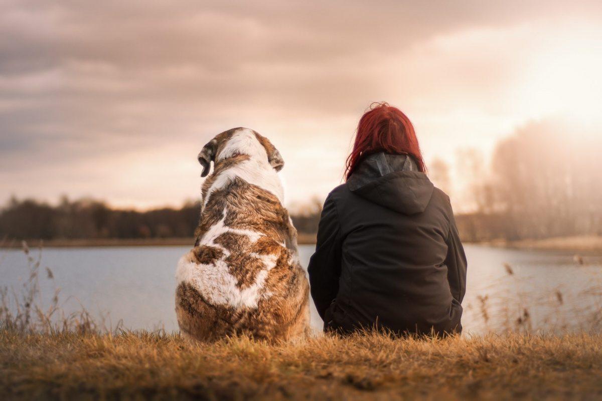 5 Beautiful Ways to Memorialize Your Deceased Pet